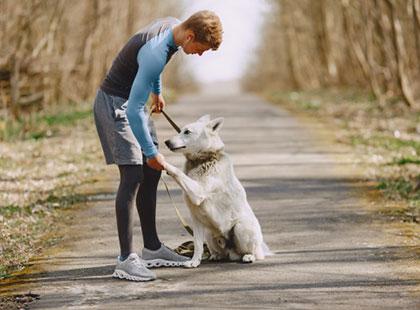 Hundeschule-Wald-Einzeltraining