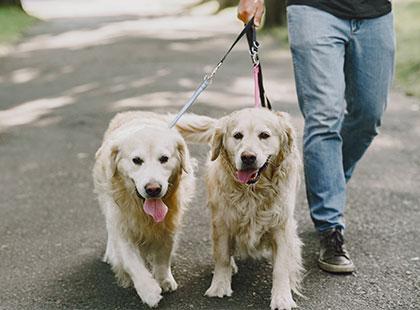 Hundeschule-Gassi-Einzeltraining